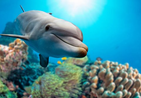 Research on dolphin teeth may hold vital information on ocean pollution