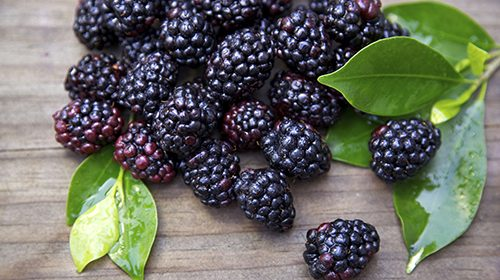 Black raspberries may inhibit oral cancer
