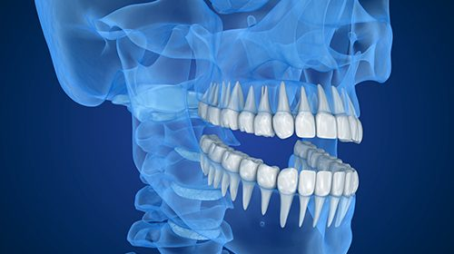 Biting and chewing trigger tooth growth